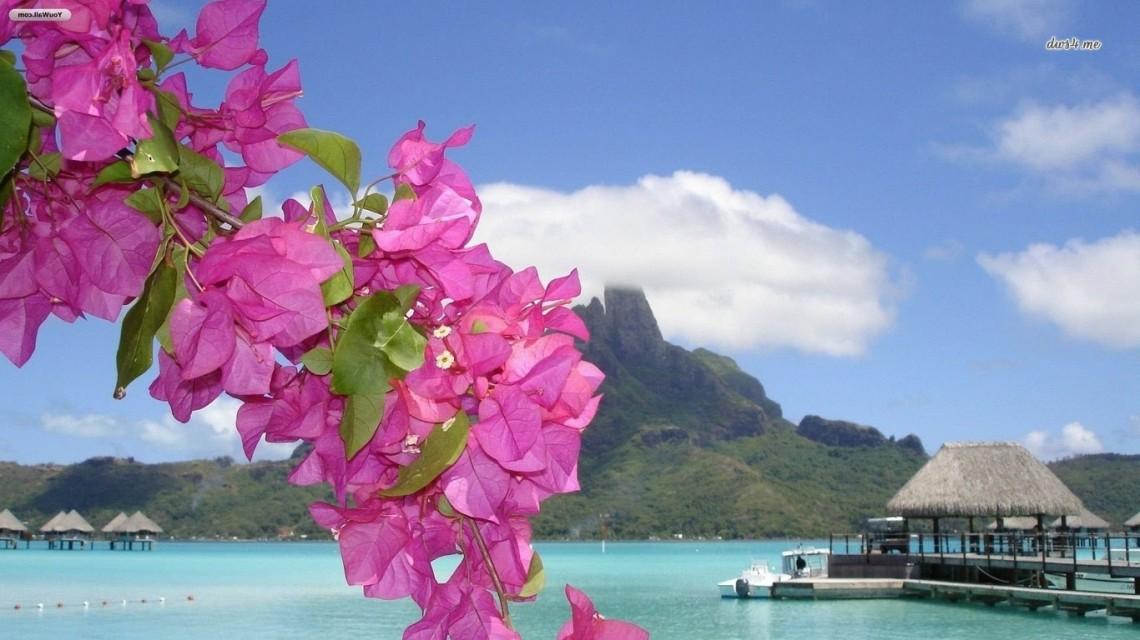 19368-purple-flowers-on-a-tropical-beach-1366x768-beach-wallpaper.jpg